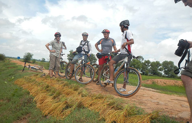 Rice Harvest Siem Reap, Siem Reap Cycling Tour